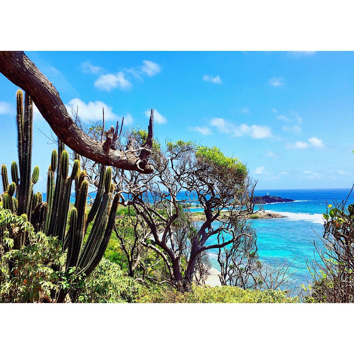 Martinique : ses plus beaux atouts en une balade