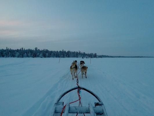 chiens de traineau.jpg